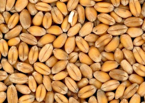 food-grains-bread-wheat-cereals-41959