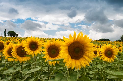 nature-field-summer-quantity