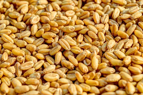 wheat-grain-agriculture-seed-54084